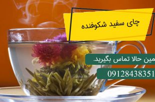چای سفید شکوفنده